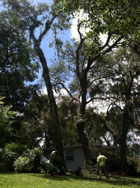 treesStanding