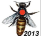 Bee - Joel's FB