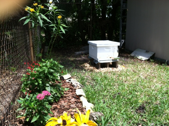 Beaman hive in back yard