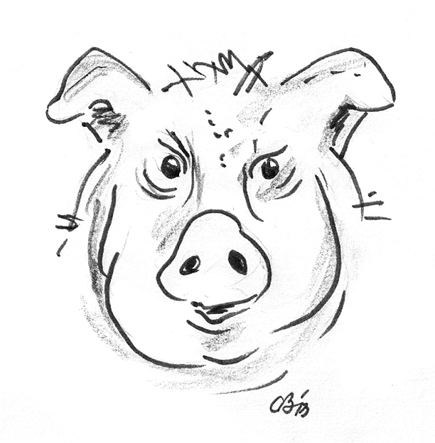The Gallery For Gt Pork Head Drawing
