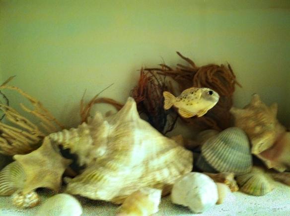 Shells underwater_4x3_300_med