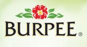 BurpeeLogo