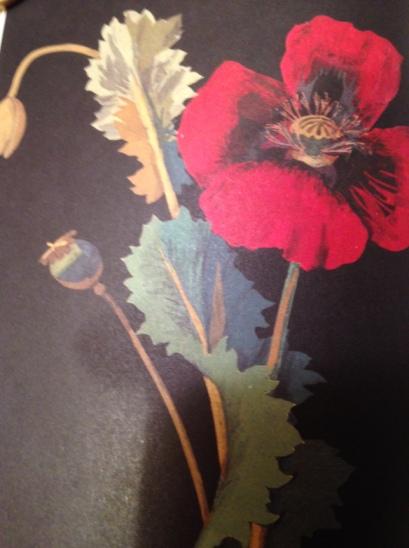 Operatic Opium Poppy