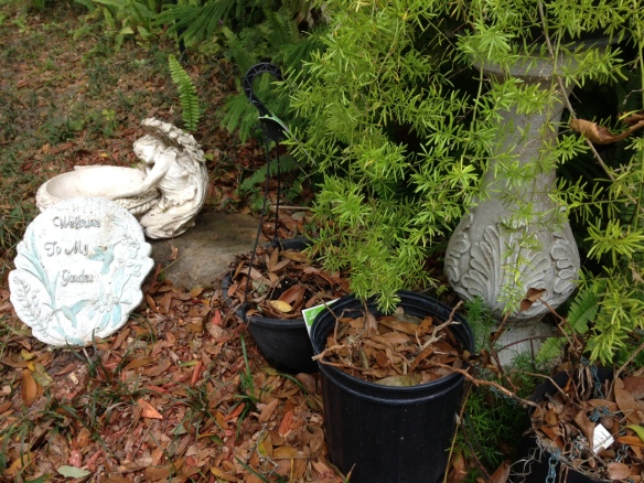 Welcome to My Garden: dead Impatiens, live asparagus fern