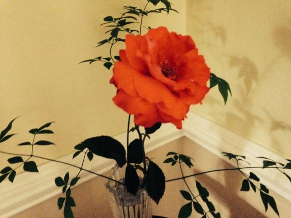 RoseWall