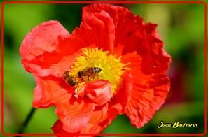 Flickr Image