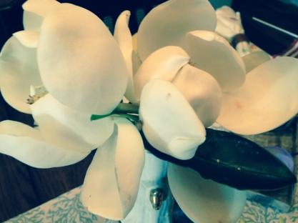 magnoliasCRISTA