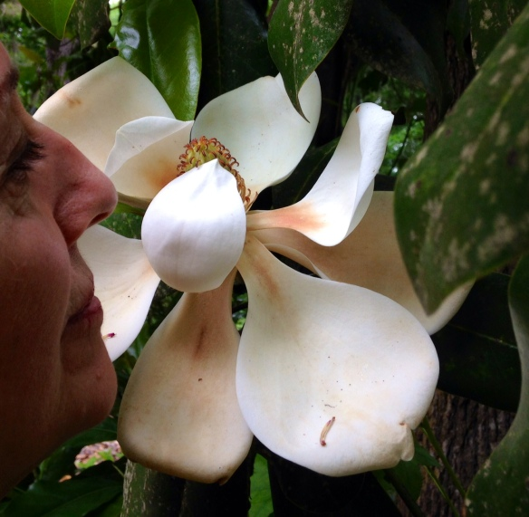 MagnoliaJan