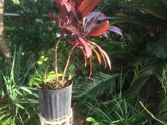 Plant Re-pot