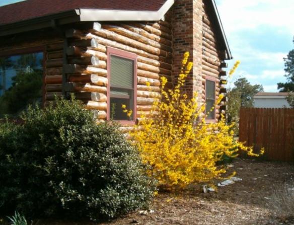 ForsythiaLogHouse